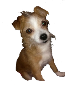 My doggie Peanut